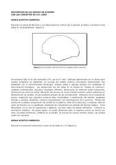 clasificacion de las afasias segun luria.doc